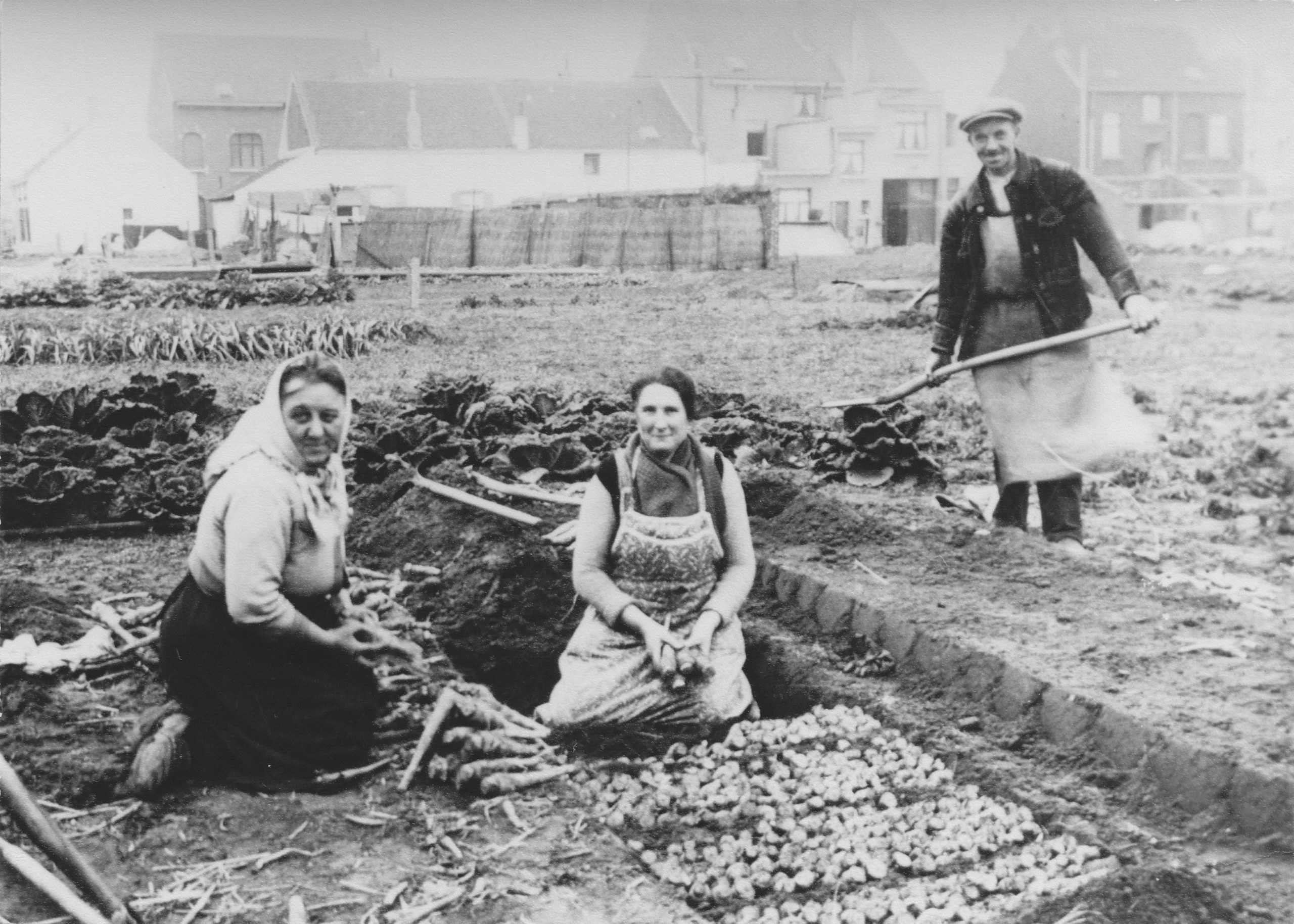 historique2 (collectie Familie P. Cnops - Centrum Agrarische Geschiedenis (CAG)